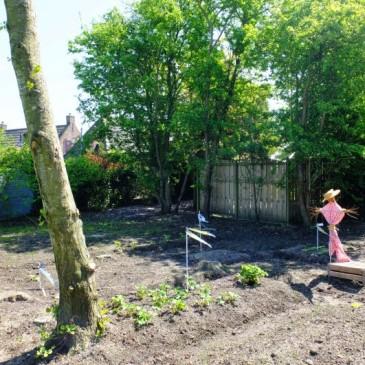 Moestuin moet wijken voor praktisch gras