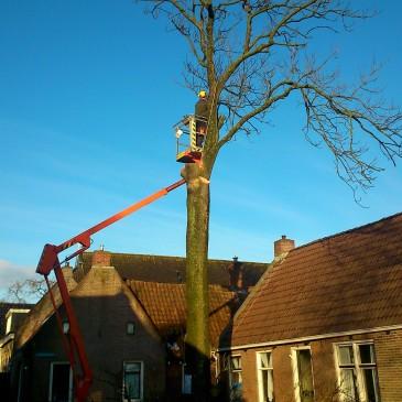 Het kappen van de boom
